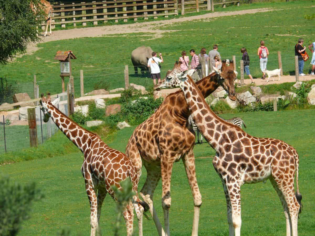 Zoo de Cerza : Hermival les vaux (crédit photo : calvados tourisme)